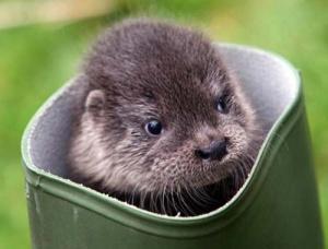 cute_otter
